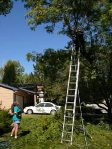tree removal silkstone